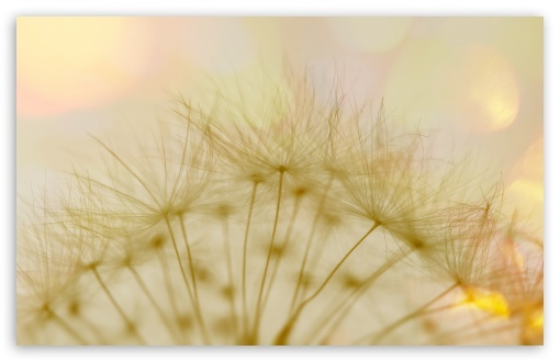 Macro Dandelion Fluff HD wallpaper for Wide 16:10 5:3 Widescreen WHXGA WQXGA WUXGA WXGA WGA ; HD 16:9 High Definition WQHD QWXGA 1080p 900p 720p QHD nHD ; UHD 16:9 WQHD QWXGA 1080p 900p 720p QHD nHD ; Standard 4:3 3:2 Fullscreen UXGA XGA SVGA DVGA HVGA HQVGA devices ( Apple PowerBook G4 iPhone 4 3G 3GS iPod Touch ) ; iPad 1/2/Mini ; Mobile 4:3 5:3 3:2 16:9 - UXGA XGA SVGA WGA DVGA HVGA HQVGA devices ( Apple PowerBook G4 iPhone 4 3G 3GS iPod Touch ) WQHD QWXGA 1080p 900p 720p QHD nHD ;