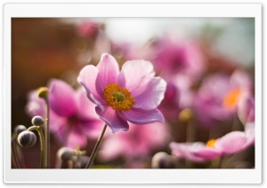 Macro Flower HD Wide Wallpaper for Widescreen