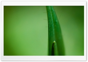 Macro Grass HD Wide Wallpaper for Widescreen