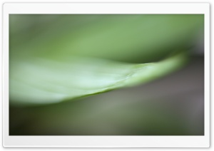 Macro Green HD Wide Wallpaper for Widescreen