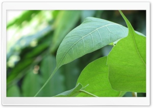 Macro Leafs HD Wide Wallpaper for Widescreen