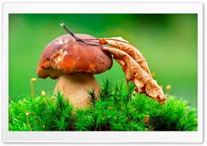 Macro Mushroom HD Wide Wallpaper for Widescreen