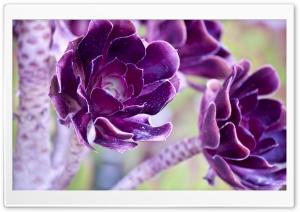 Macro Purple Flowers HD Wide Wallpaper for Widescreen