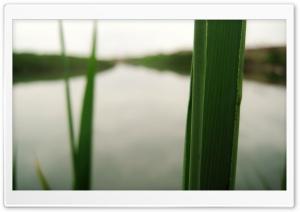 Macro Reed Ultra HD Wallpaper for 4K UHD Widescreen desktop, tablet & smartphone