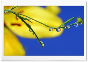 Macro Water Drops HD Wide Wallpaper for Widescreen