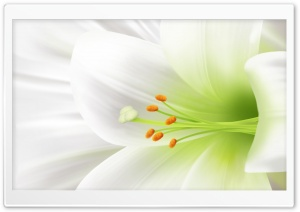 Macro White Lily Ultra HD Wallpaper for 4K UHD Widescreen desktop, tablet & smartphone
