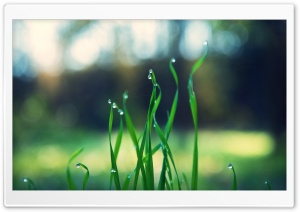 Macrophoto Dew on the Grass HD Wide Wallpaper for Widescreen