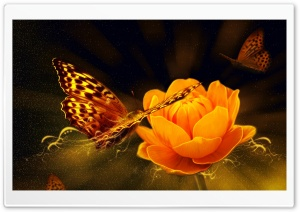 Magic Butterfly HD Wide Wallpaper for Widescreen