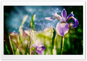 Magic Flowers HD Wide Wallpaper for Widescreen