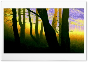 Magic Forest HD Wide Wallpaper for Widescreen