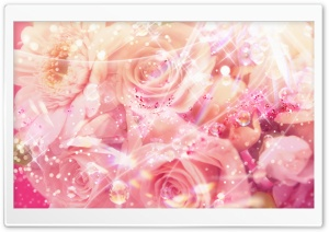 Magic Roses HD Wide Wallpaper for Widescreen