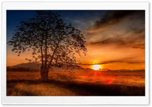 Malaysia Tree Sunset HD Wide Wallpaper for Widescreen