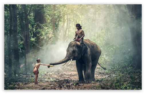 Man Riding an Elephant UltraHD Wallpaper for Wide 16:10 5:3 Widescreen WHXGA WQXGA WUXGA WXGA WGA ; 8K UHD TV 16:9 Ultra High Definition 2160p 1440p 1080p 900p 720p ; UHD 16:9 2160p 1440p 1080p 900p 720p ; Standard 3:2 Fullscreen DVGA HVGA HQVGA ( Apple PowerBook G4 iPhone 4 3G 3GS iPod Touch ) ; Mobile 5:3 3:2 16:9 - WGA DVGA HVGA HQVGA ( Apple PowerBook G4 iPhone 4 3G 3GS iPod Touch ) 2160p 1440p 1080p 900p 720p ;