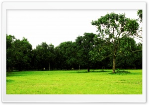 Mango Orchard HD Wide Wallpaper for Widescreen