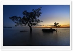 Mangrove Trees, Sea Water, Twilight, Horizon HD Wide Wallpaper for 4K UHD Widescreen desktop & smartphone