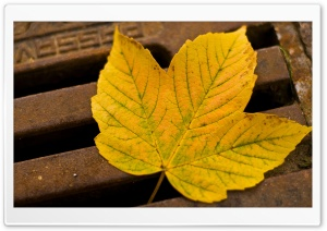 Manhole Cover Autumn HD Wide Wallpaper for Widescreen