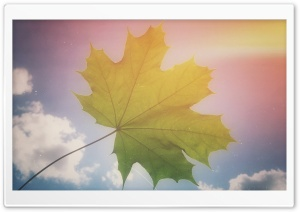Maple Leaf HD Wide Wallpaper for Widescreen