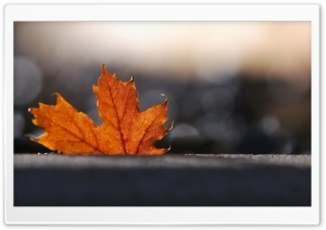 Maple Leaf, Bokeh HD Wide Wallpaper for Widescreen