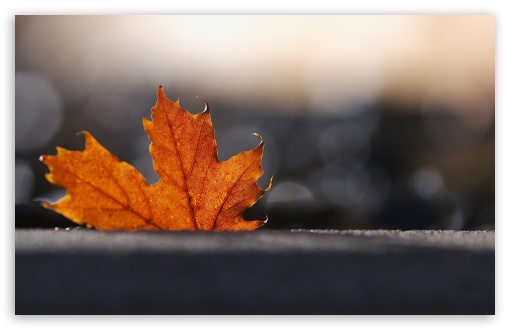Maple Leaf, Bokeh ❤ 4K UHD Wallpaper for Wide 16:10 5:3 Widescreen WHXGA WQXGA WUXGA WXGA WGA ; 4K UHD 16:9 Ultra High Definition 2160p 1440p 1080p 900p 720p ; Standard 4:3 5:4 3:2 Fullscreen UXGA XGA SVGA QSXGA SXGA DVGA HVGA HQVGA ( Apple PowerBook G4 iPhone 4 3G 3GS iPod Touch ) ; Tablet 1:1 ; iPad 1/2/Mini ; Mobile 4:3 5:3 3:2 16:9 5:4 - UXGA XGA SVGA WGA DVGA HVGA HQVGA ( Apple PowerBook G4 iPhone 4 3G 3GS iPod Touch ) 2160p 1440p 1080p 900p 720p QSXGA SXGA ; Dual 4:3 5:4 UXGA XGA SVGA QSXGA SXGA ;