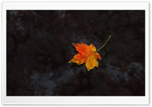 Maple Leaf On Water HD Wide Wallpaper for Widescreen