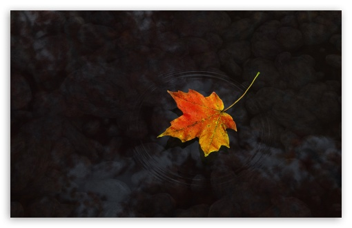 Maple Leaf On Water HD wallpaper for Wide 16:10 5:3 Widescreen WHXGA WQXGA WUXGA WXGA WGA ; HD 16:9 High Definition WQHD QWXGA 1080p 900p 720p QHD nHD ; Standard 4:3 5:4 3:2 Fullscreen UXGA XGA SVGA QSXGA SXGA DVGA HVGA HQVGA devices ( Apple PowerBook G4 iPhone 4 3G 3GS iPod Touch ) ; Tablet 1:1 ; iPad 1/2/Mini ; Mobile 4:3 5:3 3:2 16:9 5:4 - UXGA XGA SVGA WGA DVGA HVGA HQVGA devices ( Apple PowerBook G4 iPhone 4 3G 3GS iPod Touch ) WQHD QWXGA 1080p 900p 720p QHD nHD QSXGA SXGA ; Dual 16:10 5:3 16:9 4:3 5:4 WHXGA WQXGA WUXGA WXGA WGA WQHD QWXGA 1080p 900p 720p QHD nHD UXGA XGA SVGA QSXGA SXGA ;