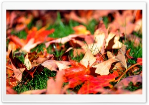 Maple Leaves HD Wide Wallpaper for Widescreen