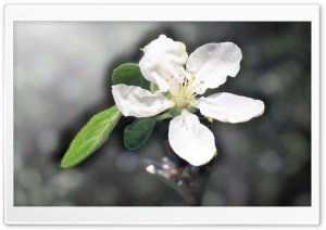 March 1 HD Wide Wallpaper for Widescreen