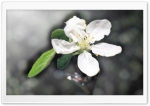 March 1 HD Wide Wallpaper for 4K UHD Widescreen desktop & smartphone