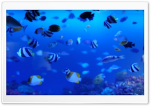 Marine Life HD Wide Wallpaper for Widescreen