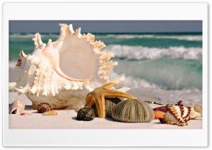 Marine life Ultra HD Wallpaper for 4K UHD Widescreen desktop, tablet & smartphone