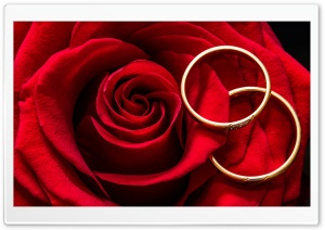 Marriage, Love, Wedding Rings, Red Rose Ultra HD Wallpaper for 4K UHD Widescreen desktop, tablet & smartphone