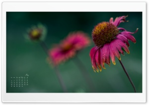 May Flower Calendar HD Wide Wallpaper for 4K UHD Widescreen desktop & smartphone