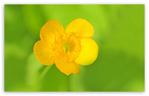 Meadow Buttercup HD wallpaper for Wide 16:10 5:3 Widescreen WHXGA WQXGA WUXGA WXGA WGA ; UltraWide 21:9 24:10 ; HD 16:9 High Definition WQHD QWXGA 1080p 900p 720p QHD nHD ; UHD 16:9 WQHD QWXGA 1080p 900p 720p QHD nHD ; Standard 4:3 5:4 3:2 Fullscreen UXGA XGA SVGA QSXGA SXGA DVGA HVGA HQVGA devices ( Apple PowerBook G4 iPhone 4 3G 3GS iPod Touch ) ; Tablet 1:1 ; iPad 1/2/Mini ; Mobile 4:3 5:3 3:2 16:9 5:4 - UXGA XGA SVGA WGA DVGA HVGA HQVGA devices ( Apple PowerBook G4 iPhone 4 3G 3GS iPod Touch ) WQHD QWXGA 1080p 900p 720p QHD nHD QSXGA SXGA ; Dual 4:3 5:4 UXGA XGA SVGA QSXGA SXGA ;