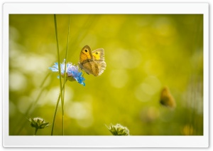 Meadow Butterfly HD Wide Wallpaper for Widescreen