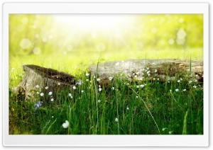 Meadow Flowers HD Wide Wallpaper for Widescreen