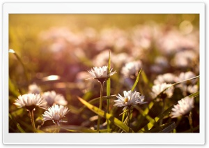 Meadow Flowers Macro HD Wide Wallpaper for Widescreen