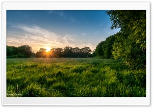 Meadow Sunset. HD Wide Wallpaper for 4K UHD Widescreen desktop & smartphone