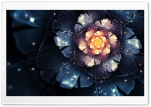 Megaflower HD Wide Wallpaper for 4K UHD Widescreen desktop & smartphone