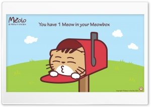 Meolo Meowbox - Meow in the Box HD Wide Wallpaper for 4K UHD Widescreen desktop & smartphone
