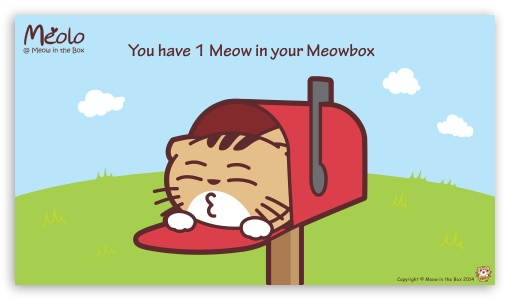Meolo Meowbox - Meow in the Box HD wallpaper for HD 16:9 High Definition WQHD QWXGA 1080p 900p 720p QHD nHD ; Tablet 1:1 ; Mobile 16:9 - WQHD QWXGA 1080p 900p 720p QHD nHD ;