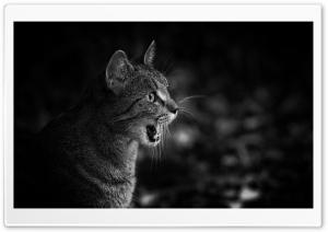 Meow Ultra HD Wallpaper for 4K UHD Widescreen desktop, tablet & smartphone