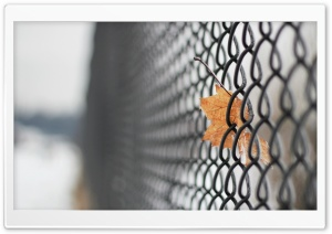 Mesh Fence HD Wide Wallpaper for Widescreen