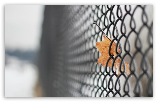 Mesh Fence ❤ 4K UHD Wallpaper for Wide 16:10 5:3 Widescreen WHXGA WQXGA WUXGA WXGA WGA ; 4K UHD 16:9 Ultra High Definition 2160p 1440p 1080p 900p 720p ; Standard 4:3 5:4 3:2 Fullscreen UXGA XGA SVGA QSXGA SXGA DVGA HVGA HQVGA ( Apple PowerBook G4 iPhone 4 3G 3GS iPod Touch ) ; Tablet 1:1 ; iPad 1/2/Mini ; Mobile 4:3 5:3 3:2 16:9 5:4 - UXGA XGA SVGA WGA DVGA HVGA HQVGA ( Apple PowerBook G4 iPhone 4 3G 3GS iPod Touch ) 2160p 1440p 1080p 900p 720p QSXGA SXGA ; Dual 5:4 QSXGA SXGA ;