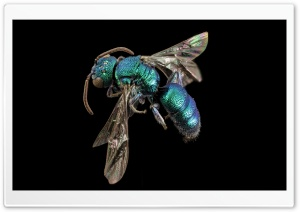 Metallic Green Bee HD Wide Wallpaper for Widescreen