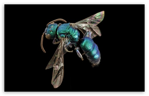Metallic Green Bee ❤ 4K UHD Wallpaper for Wide 16:10 5:3 Widescreen WHXGA WQXGA WUXGA WXGA WGA ; 4K UHD 16:9 Ultra High Definition 2160p 1440p 1080p 900p 720p ; UHD 16:9 2160p 1440p 1080p 900p 720p ; Standard 4:3 5:4 3:2 Fullscreen UXGA XGA SVGA QSXGA SXGA DVGA HVGA HQVGA ( Apple PowerBook G4 iPhone 4 3G 3GS iPod Touch ) ; Tablet 1:1 ; iPad 1/2/Mini ; Mobile 4:3 5:3 3:2 16:9 5:4 - UXGA XGA SVGA WGA DVGA HVGA HQVGA ( Apple PowerBook G4 iPhone 4 3G 3GS iPod Touch ) 2160p 1440p 1080p 900p 720p QSXGA SXGA ;