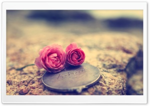 Miniature Roses HD Wide Wallpaper for Widescreen