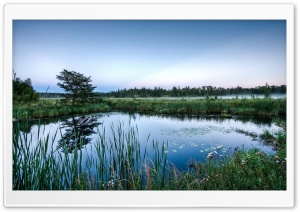 Mirror Glass Pond HD Wide Wallpaper for Widescreen