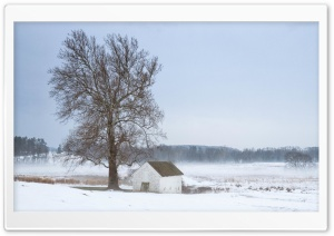 Mist, Tree, House, Winter Ultra HD Wallpaper for 4K UHD Widescreen desktop, tablet & smartphone
