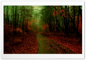 Misty Autumn HD Wide Wallpaper for Widescreen
