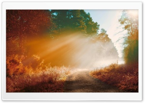Misty Forest Road, Autumn Ultra HD Wallpaper for 4K UHD Widescreen desktop, tablet & smartphone